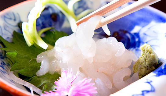 【富山の宝石】白海老のお刺身